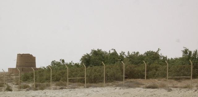 شجرة الاراك ar2.jpg