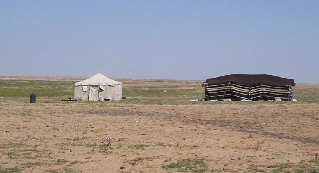 بيوت الشعر او الخيم عند bedu06.jpg